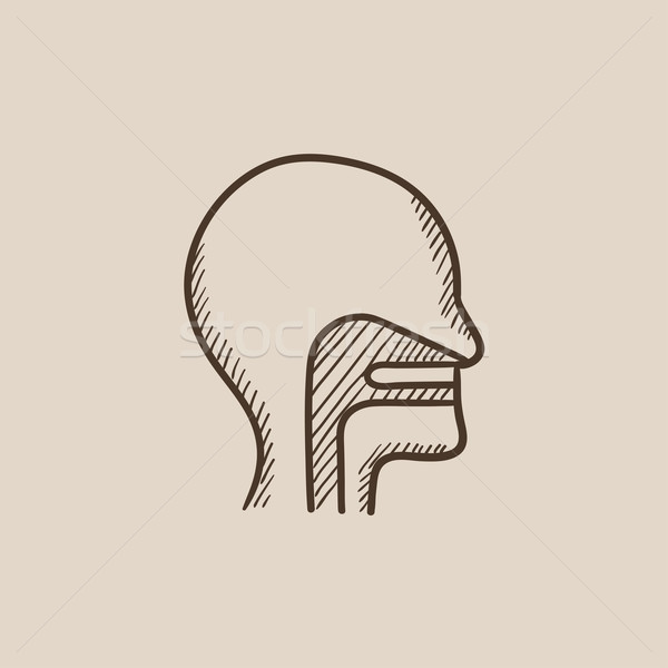 Human head with ear, nose, throat system sketch icon. Stock photo © RAStudio