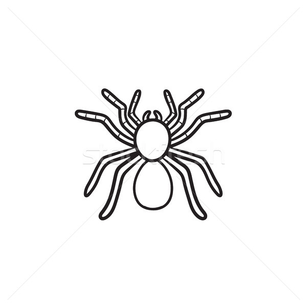 Spider tarantula hand drawn sketch icon. Stock photo © RAStudio