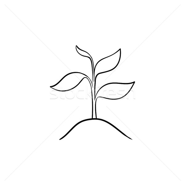 Sprout of plant hand drawn sketch icon. Stock photo © RAStudio