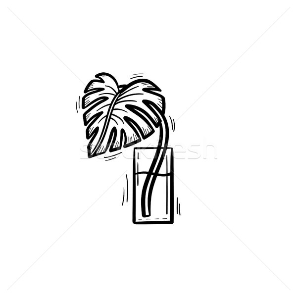 Palm sprout in a glass of water sketch icon. Stock photo © RAStudio