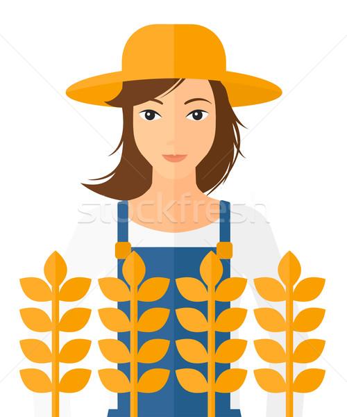 男 麦畑 農家 立って ベクトル デザイン ストックフォト © RAStudio