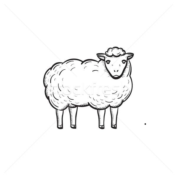 Sheep hand drawn sketch icon. Stock photo © RAStudio