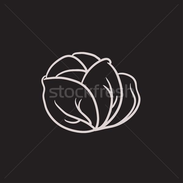 キャベツ スケッチ アイコン ベクトル 孤立した 手描き ストックフォト © RAStudio