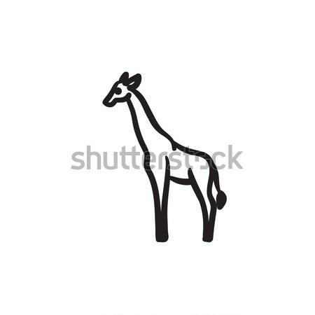 жираф эскиз икона вектора изолированный рисованной Сток-фото © RAStudio