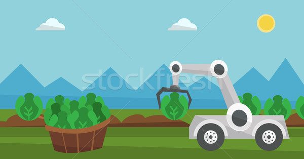 Robot harvesting cabbage at agricultural field. Stock photo © RAStudio