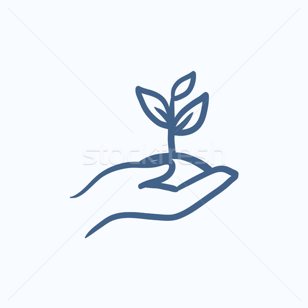 Hands holding seedling in soil sketch icon. Stock photo © RAStudio