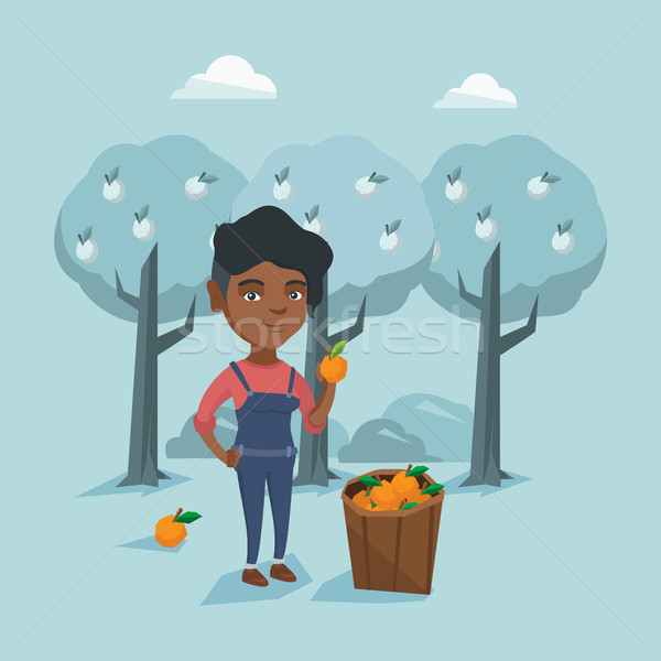 Young african-american farmer collecting oranges. Stock photo © RAStudio