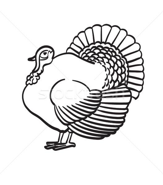 Thanksgiving day turkey hand drawn sketch icon. Stock photo © RAStudio
