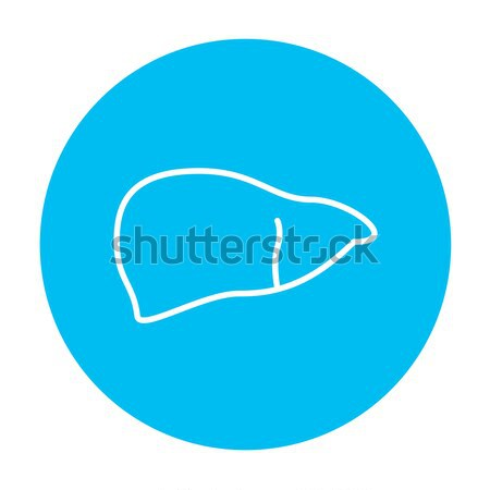 Stock photo: Liver line icon.
