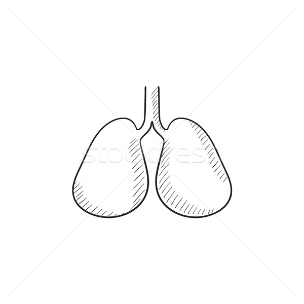 Lungs sketch icon. Stock photo © RAStudio