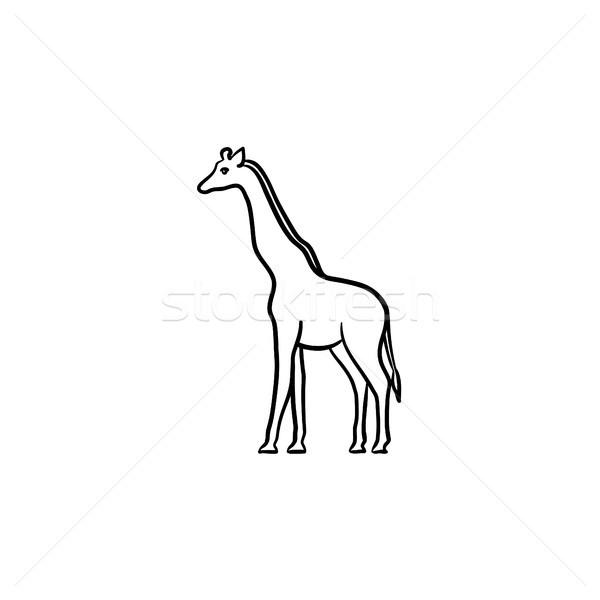 Giraffe hand drawn sketch icon. Stock photo © RAStudio