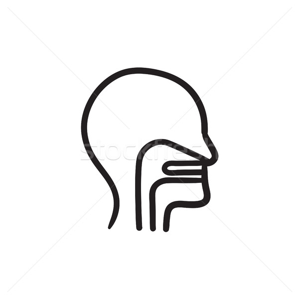 Human head with ear, nose, throat sketch icon. Stock photo © RAStudio
