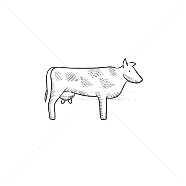 Cow sketch icon. Stock photo © RAStudio