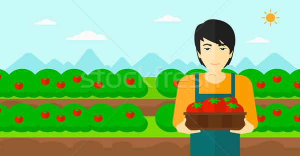 Farmer collecting tomatos. Stock photo © RAStudio