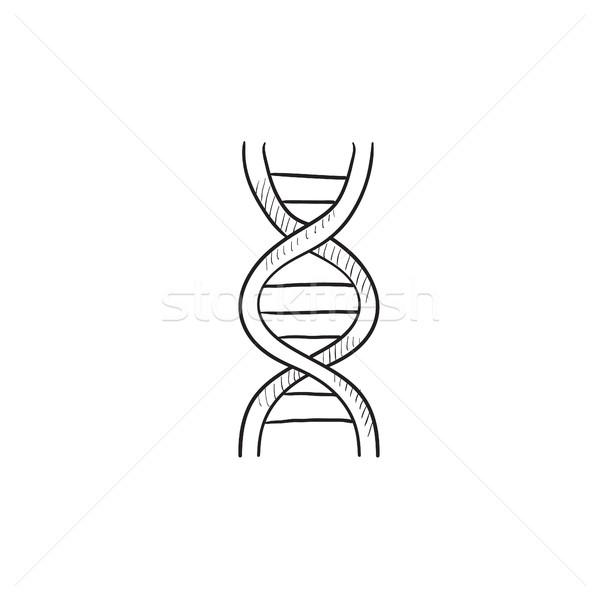DNA szkic ikona wektora odizolowany Zdjęcia stock © RAStudio