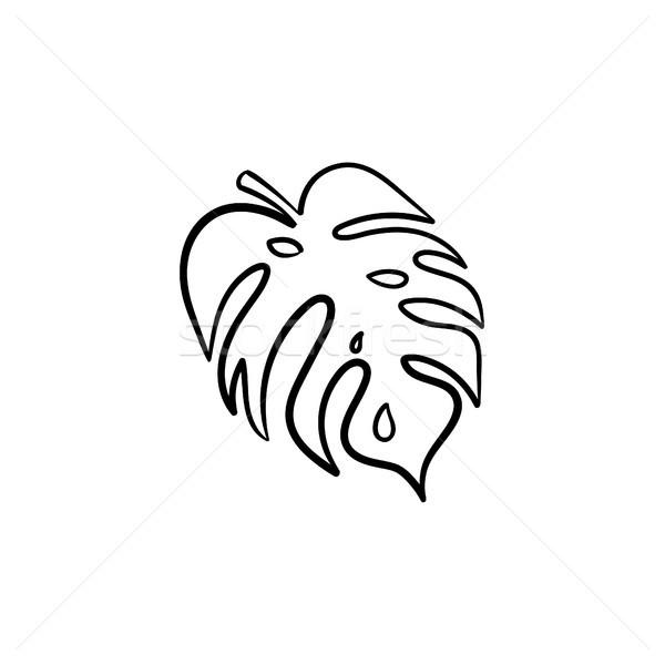 Hoja de palma dibujado a mano boceto icono vector Foto stock © RAStudio