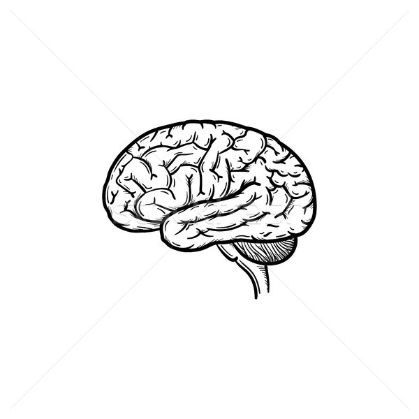 Human brain hand drawn outline doodle icon. Stock photo © RAStudio