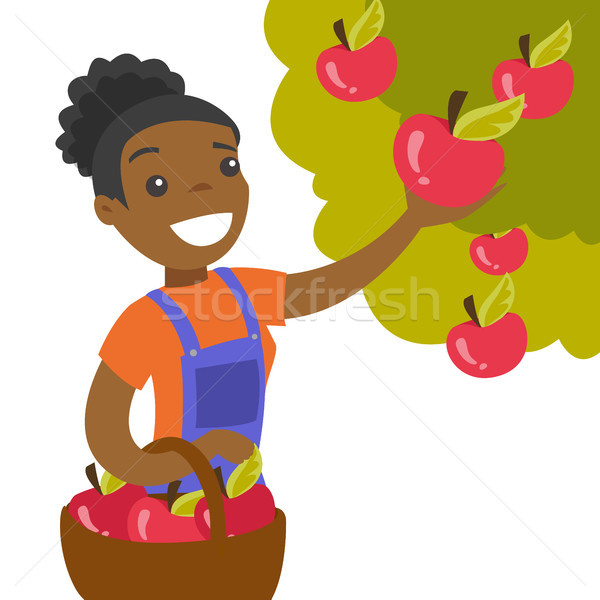 A black woman collects apples from an apple tree in a garden. Stock photo © RAStudio