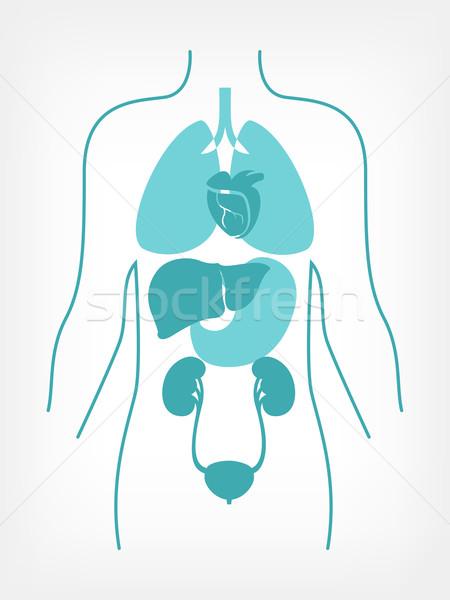 Médico infográficos elementos vetor medicina Foto stock © RAStudio