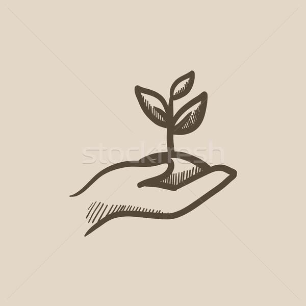 рук рассада почвы эскиз икона Сток-фото © RAStudio