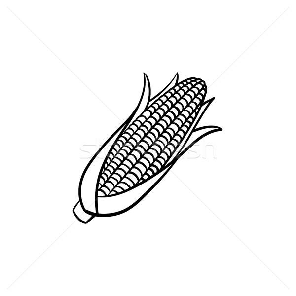 Corn cob hand drawn sketch icon. Stock photo © RAStudio