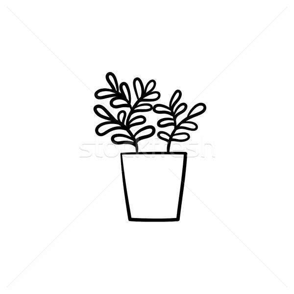 Ficus in a pot hand drawn sketch icon. Stock photo © RAStudio