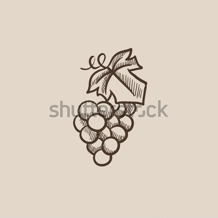 Bunch of grapes sketch icon. Stock photo © RAStudio