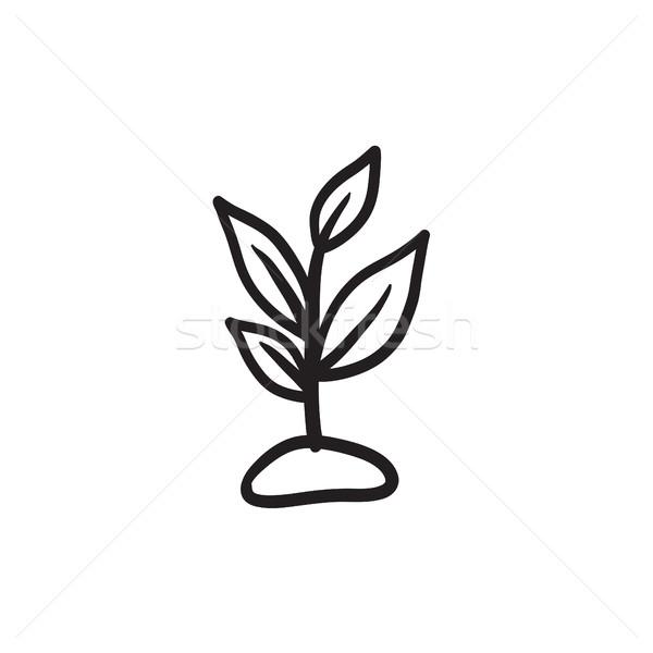 Spruit schets icon vector geïsoleerd Stockfoto © RAStudio