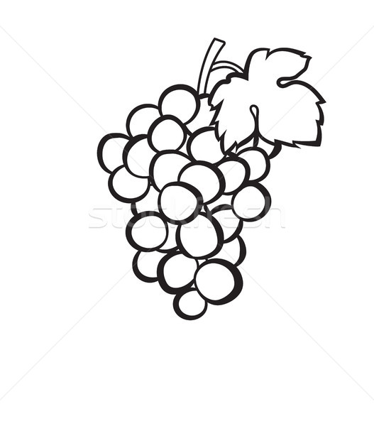 Cluster of grapes hand drawn sketch icon. Stock photo © RAStudio