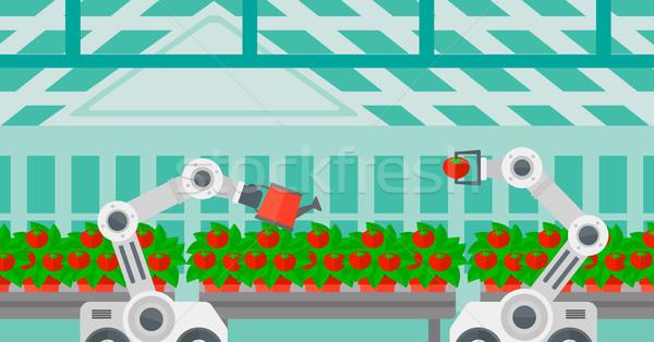 Robot de trabajo invernadero tomates cosecha Foto stock © RAStudio