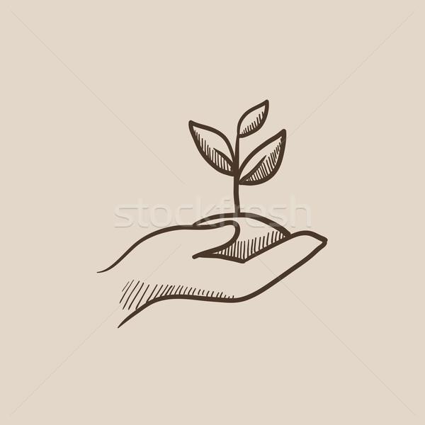 Handen kiemplant bodem schets icon Stockfoto © RAStudio