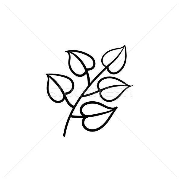 Linden leaves on branch hand drawn sketch icon. Stock photo © RAStudio