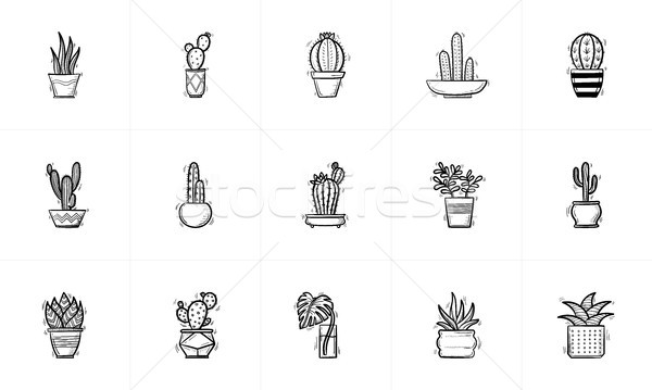 House potted cactus and succulent sketch icon set. Stock photo © RAStudio
