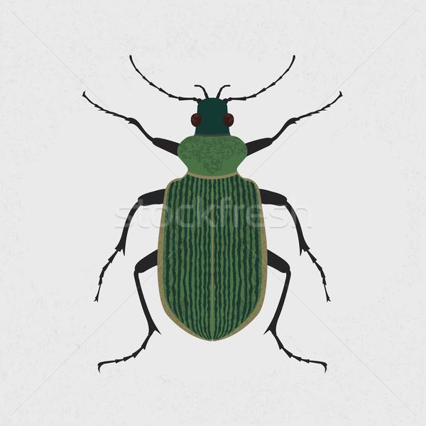 Verde besouro eps10 vetor formato madeira Foto stock © ratch0013