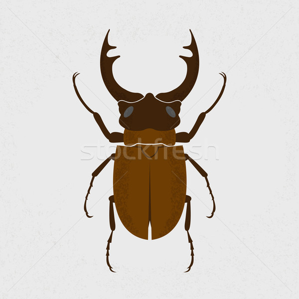 Stag beetle, the largest beetle , eps10 vector format Stock photo © ratch0013