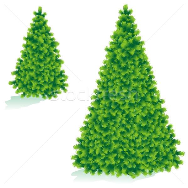 рождественская елка два изолированный белый жить зеленый Сток-фото © ratselmeister