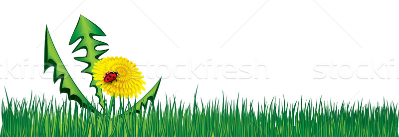 Ladybird on Dandelion in the grass. Vector background Stock photo © Ray_of_Light