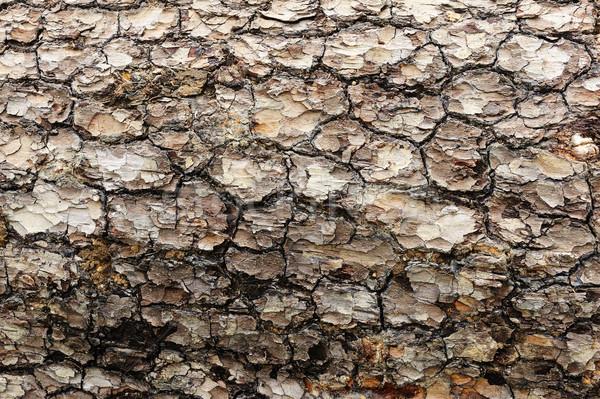Ağaç havlama detay doku görmek büyük Stok fotoğraf © raywoo