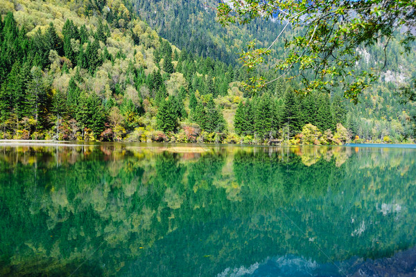 Forest and lake landscape of China jiuzhaigou Stock photo © raywoo