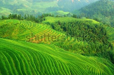 Groene rijstveld textuur boom gebouw achtergrond Stockfoto © raywoo