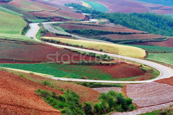 China rural field landscape Stock photo © raywoo
