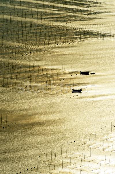 Zeewier boerderij sterke zonlicht natuur schoonheid Stockfoto © raywoo