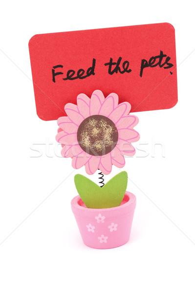 Stockfoto: Huisdieren · woorden · geschreven · Rood · papier · zon