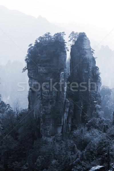 Stromy górskich lasu parku drzewo krajobraz Zdjęcia stock © raywoo