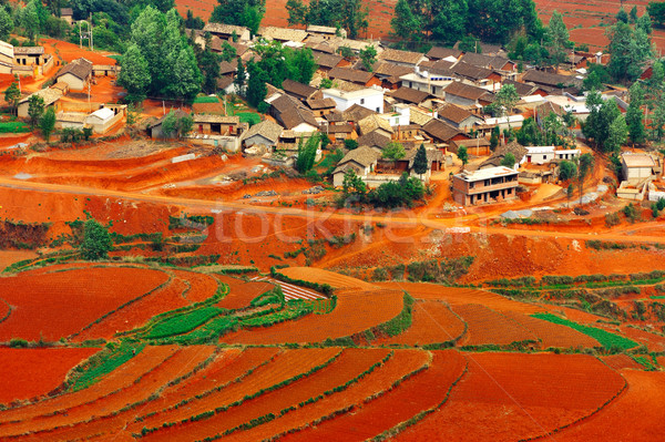 Village on red field Stock photo © raywoo