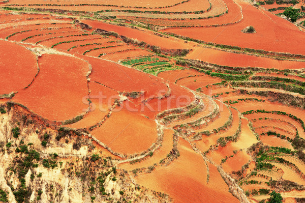 Red field Stock photo © raywoo
