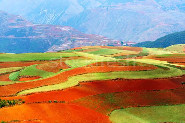 Beautiful fields landscapes Stock photo © raywoo