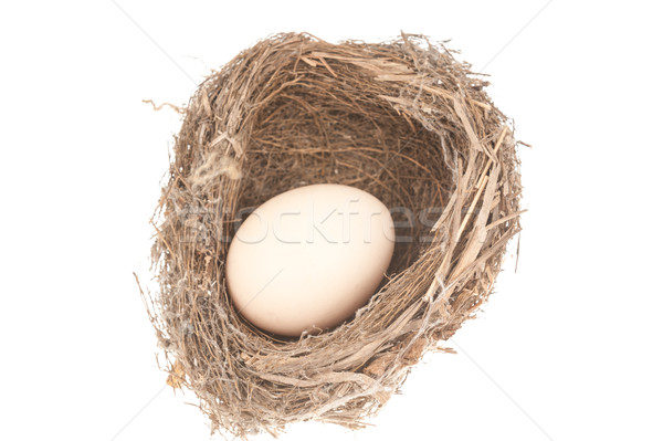 Bird nest and egg Stock photo © raywoo