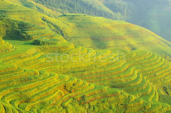 Chinese groene rijstveld boom achtergrond berg Stockfoto © raywoo
