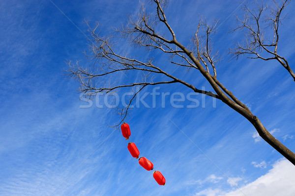 Chinese red lanterns hanging on the tree for  celebrations Stock photo © raywoo